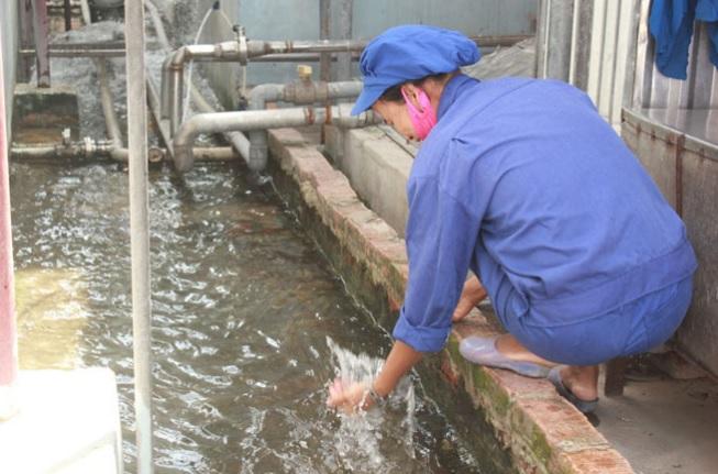 chất lượng nước sau khi được xử lý bởi hệ thống xử lý nước thải.